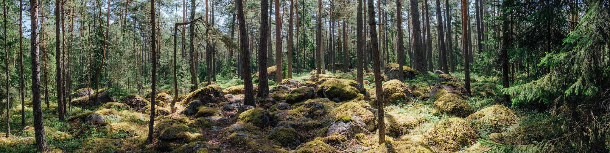 Forest_visitestonia_Arro